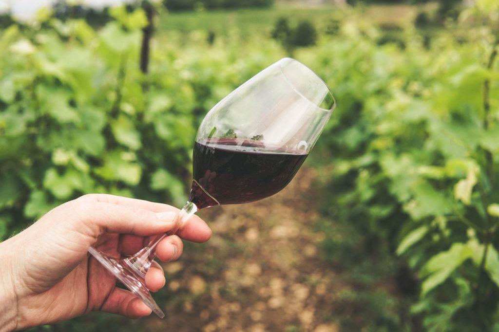 Main tenant un verre de vin rouge penché dans les vignes