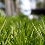 Gazon vert, herbe jardin