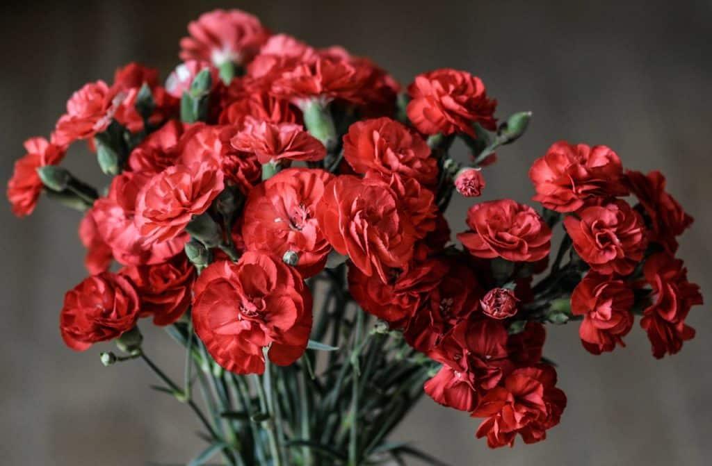 Bouquet d'œillet rouge