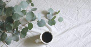 Eucalyptus Gunnii fleurs, branches à côté d'une tasse de café